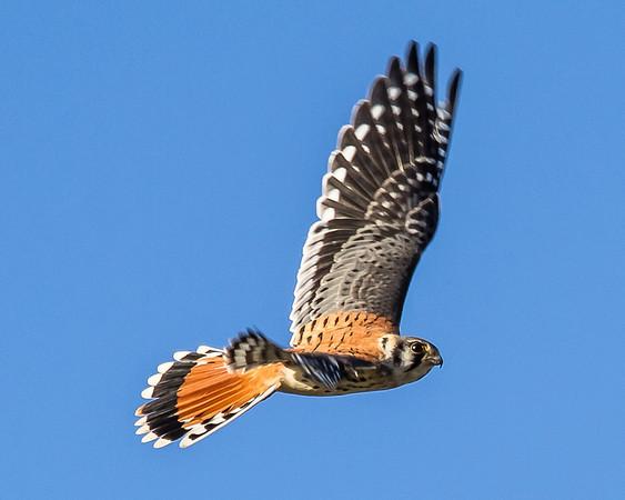 Rob O'Neill's Wingshots